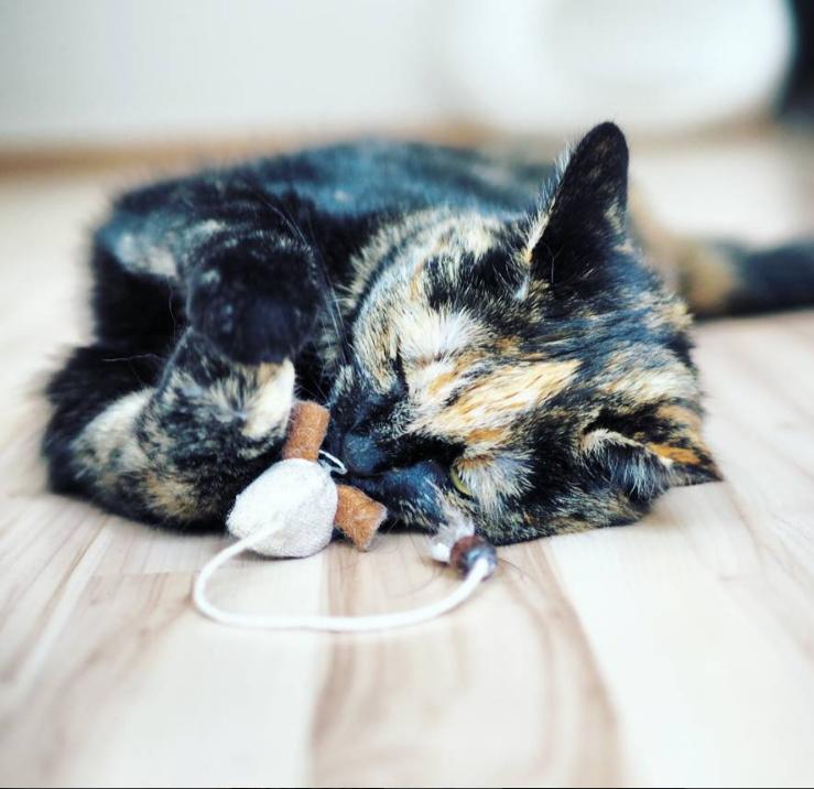 richtig spielen mit katzen oder die maus in dir rein getigert. Black Bedroom Furniture Sets. Home Design Ideas